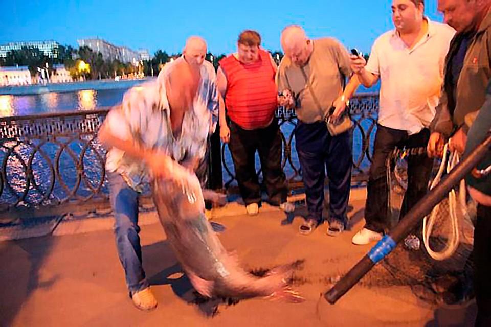 На Бережковской набережной поймали огромного толстолобика