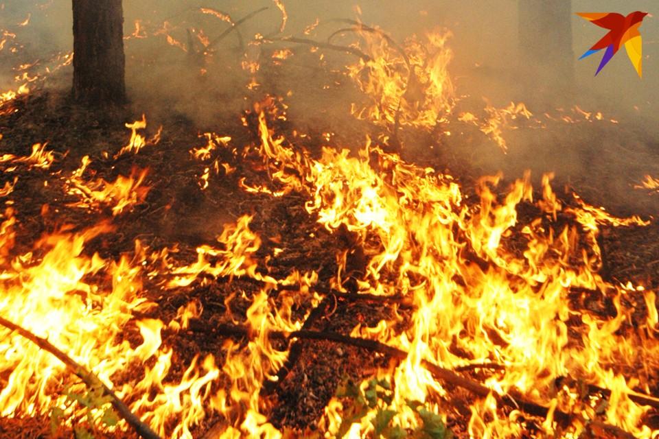 К сезону горящих лесов готовились заранее.