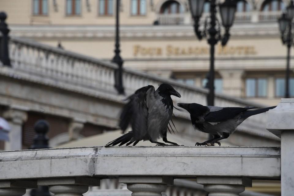 Так птицы отчаянно защищают своих птенцов.