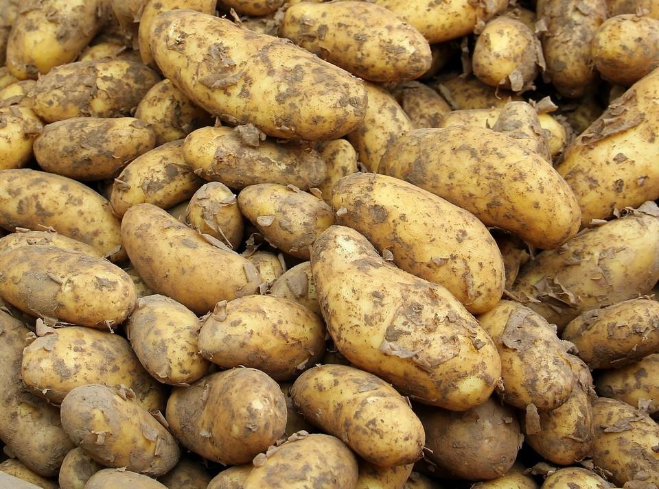 В СКО за 1 кг картофеля просят до 500 тенге