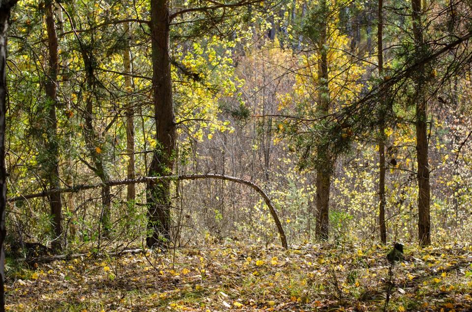 В ближайшие дни в лес ходить не рекомендуют