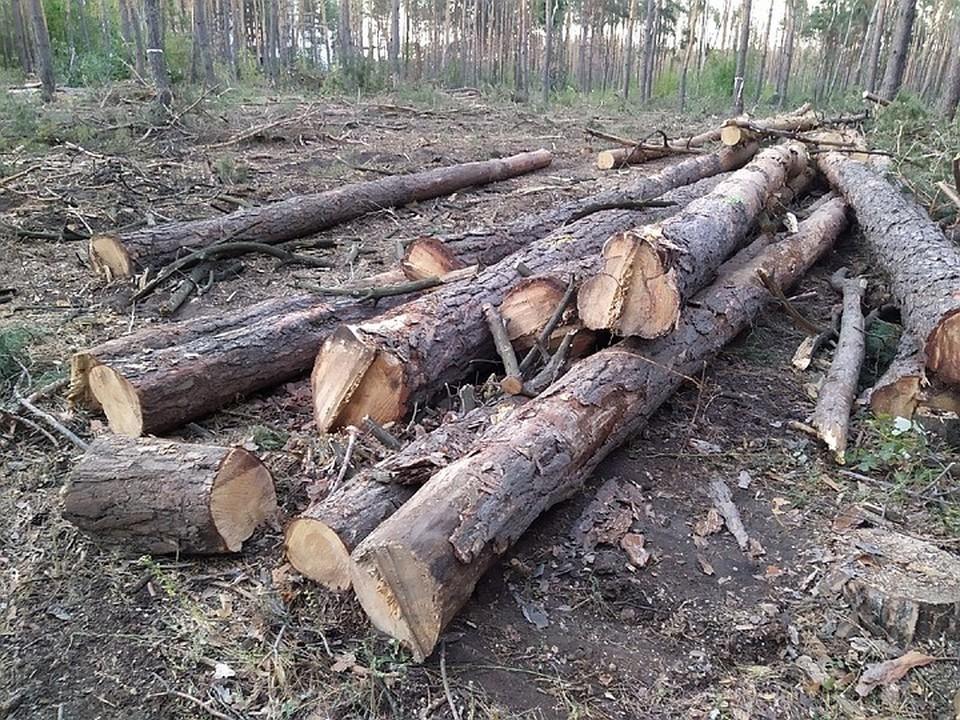Северный лес после эпопеи с незаконным забором лишился многих деревьев.