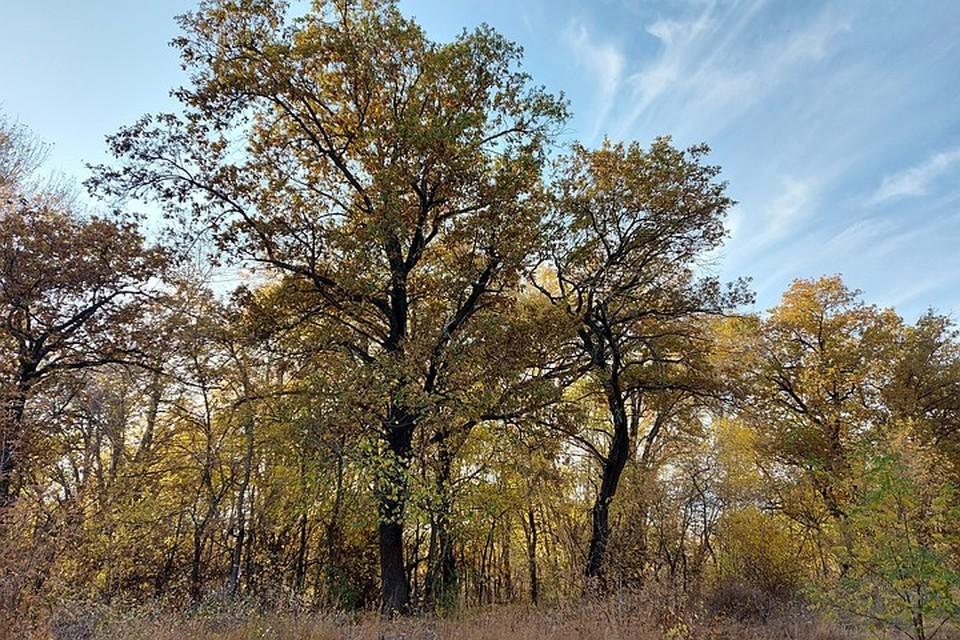 Эти дубы и другие деревья встали на пути новой дороги.