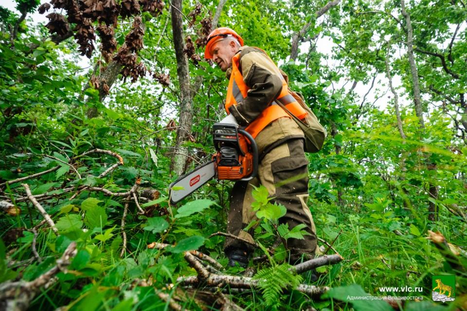 Во Владивостоке обрезают поврежденные деревья. Фото:Евгений Кулешов/Администрация Владивостока.