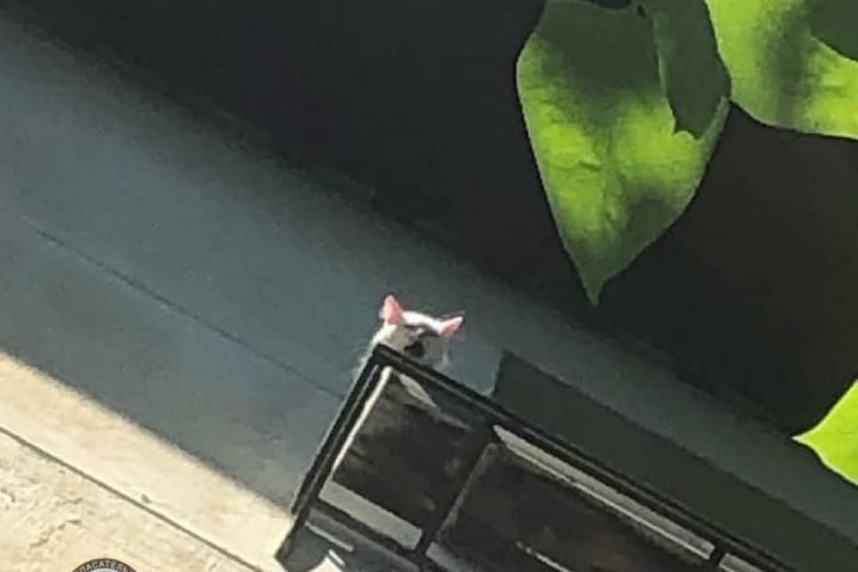 В Петербурге спасли кота, запертого на карнизе под полящим солнцем / Фото: Кошкиспас