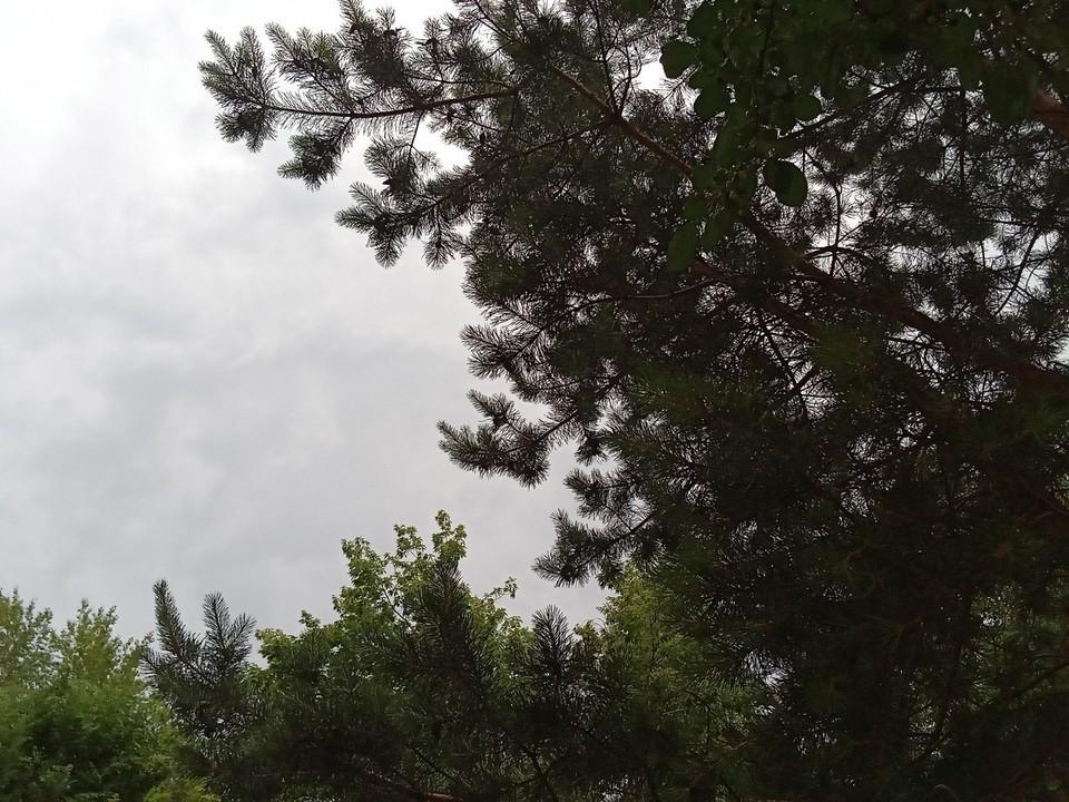 Погода на Ямале на 9 июля