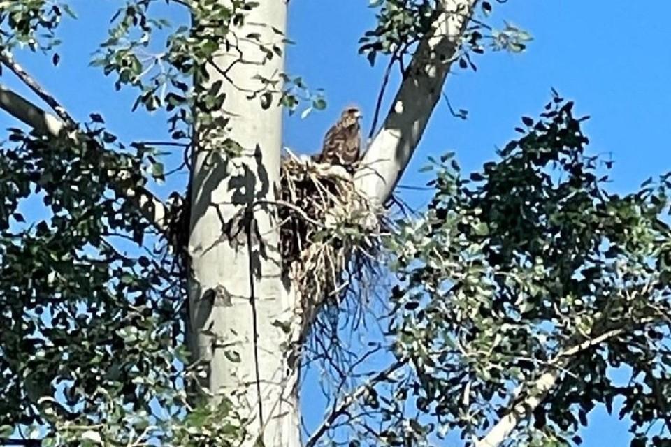 Птицу заметили на территории будущего парка. Фото: Анна Терешкова // Инстаграм.