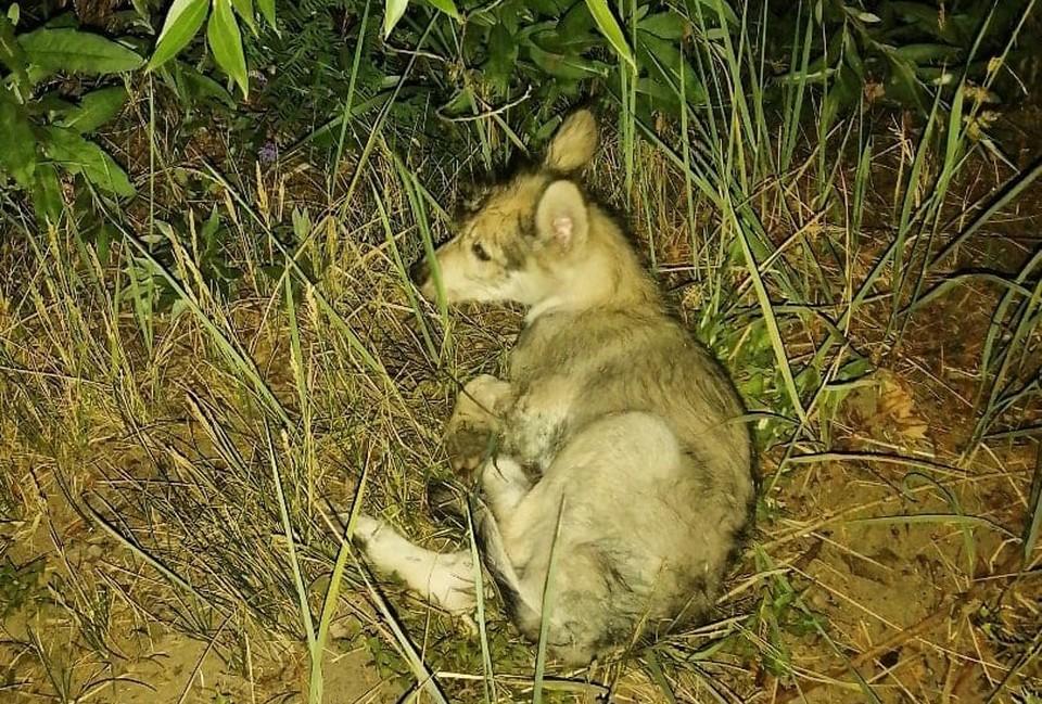 Щенка выкинули умирать на полузаброшенной территории в расчете, что его там никто не найдет. Фото: Аполлинария ГРОСС