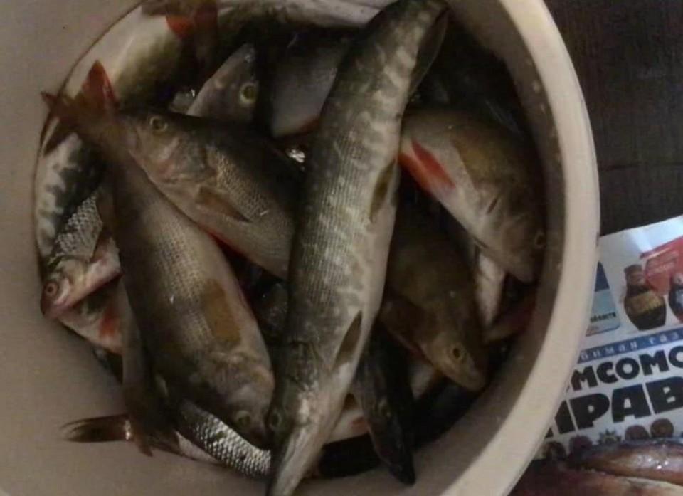 День рыбака отмечают 11 июля в России