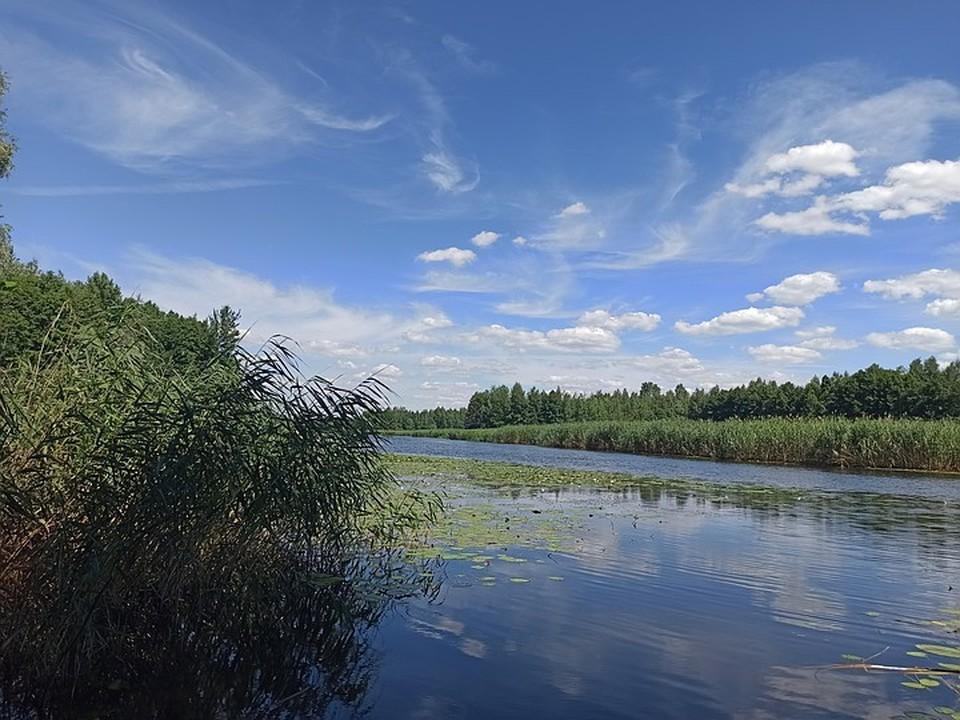 Тело 32-летнего мужчины достали из пруда Новый в поселке Панино.