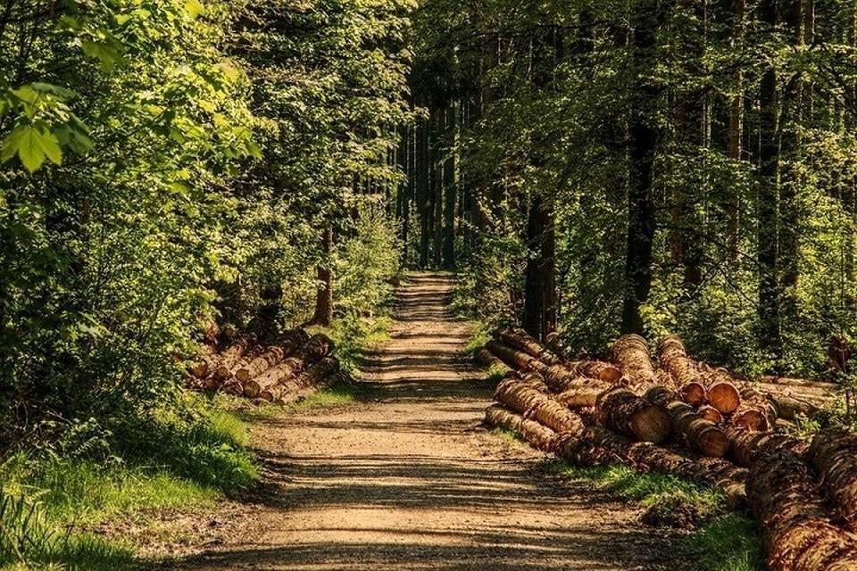 Власти ограничили в Беларуси посещение лесов. Фото: pixabay.com.