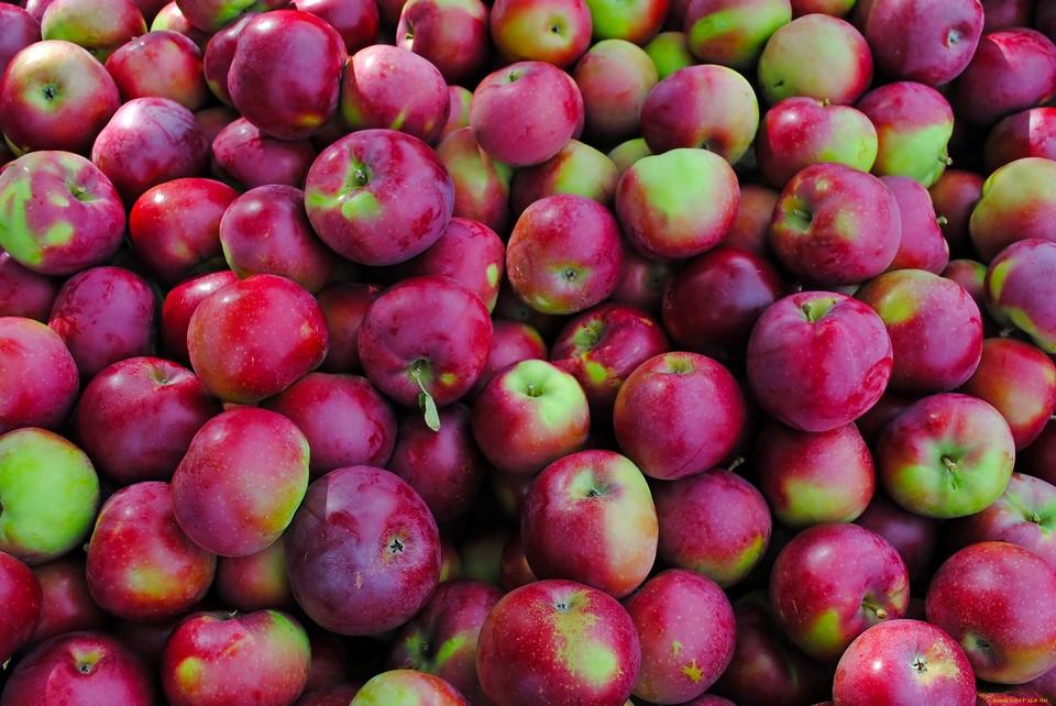 В Смоленской области уничтожили более 19 тонн опасных яблок.