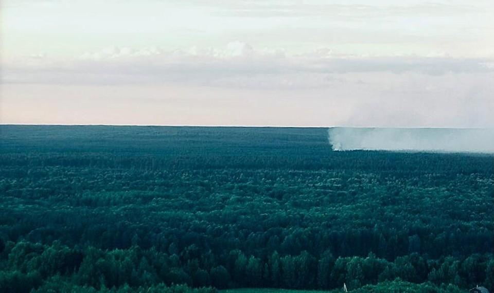 Два лесных пожара ликвидировали в Нижегородской области за сутки