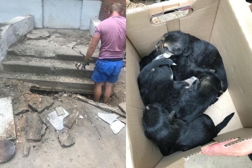 Неравнодушные люди бросились вызволять щенков из плена. Фото: Ольга Завдовьева.