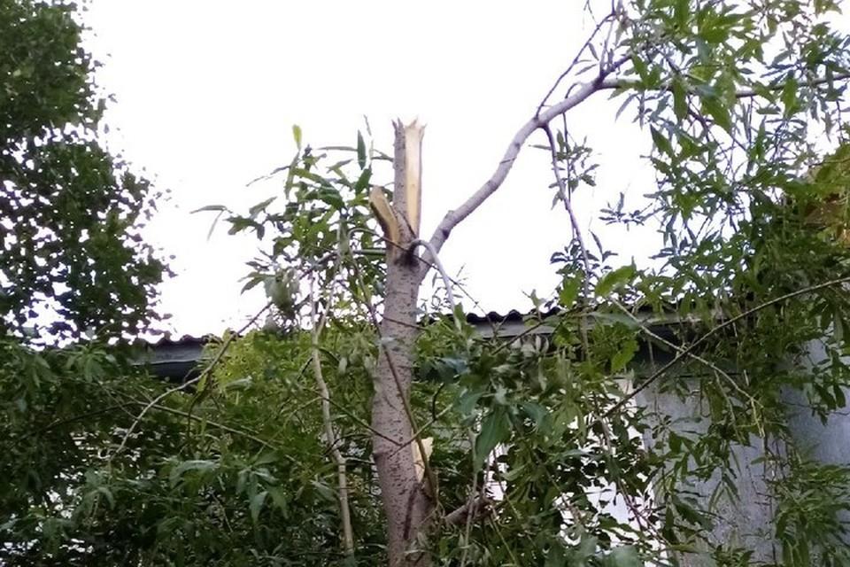 Фото: паблик «Лабытнанги Info». Те самые деревья по ул. Школьная.