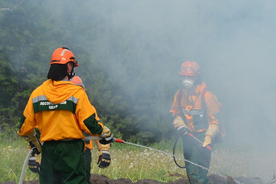 Фото: Краевой лесопожарный центр