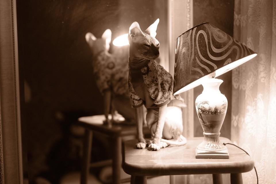 Кот Чепа очень любит хозяина. Фото: предоставлено героиней публикации.