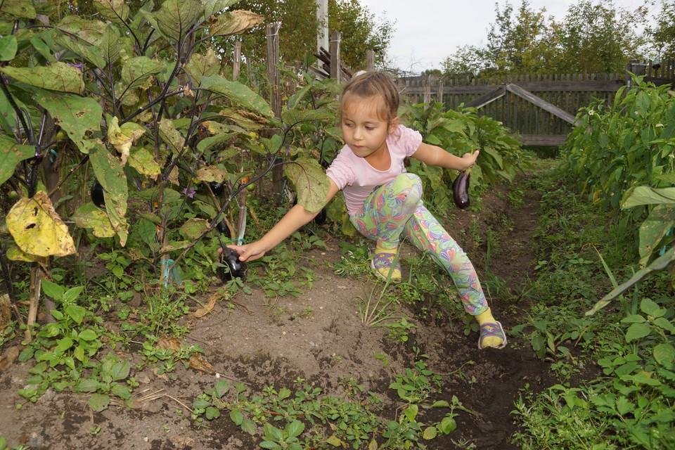 В августе созревает большая часть овощей, ягод и фруктов Фото: ЖИРНОВ Павел