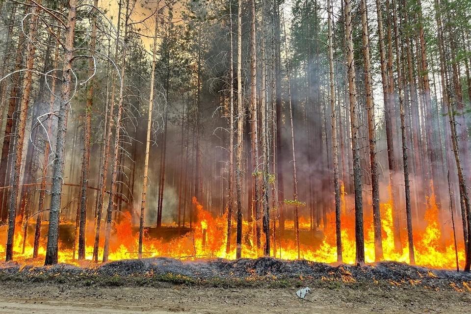 Площадь пожаров в Карелии увеличивается.