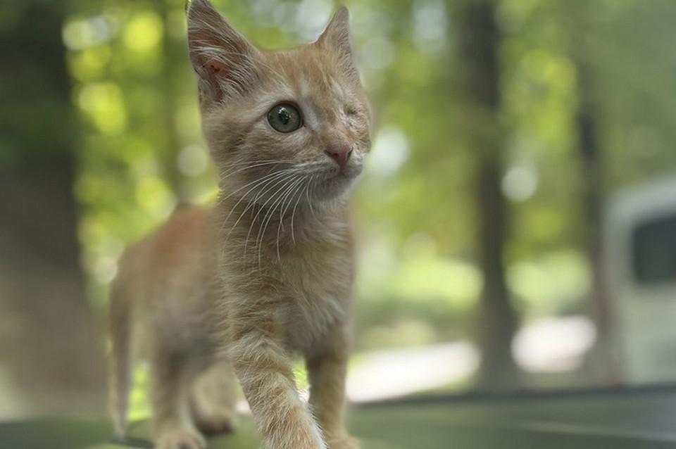 Котенок обрел семью. Фото: приют Пиф