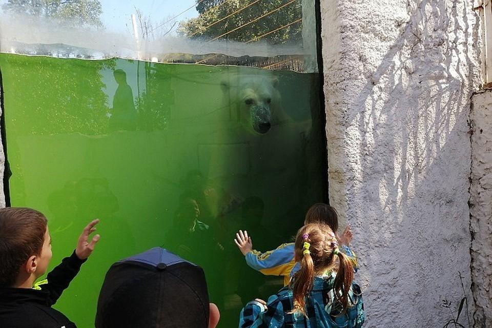 Хабар выписывал изящные пируэты в бассейне и общался с людьми через стекло
