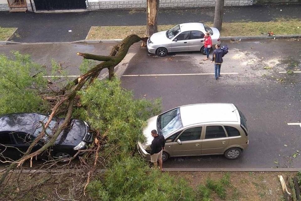 Ствол дерева оказался сломан в результате мощного ветра. Фото: AMS/телеграм-канал