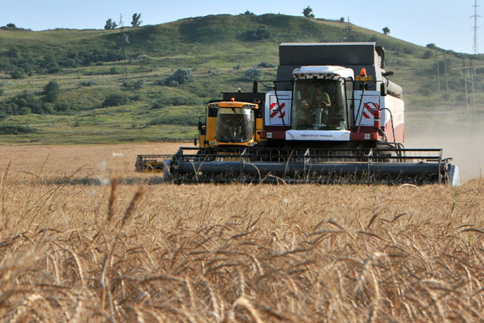 К этому времени фермеры уже намолотили 375 500 тонн зерна и бобовых культур