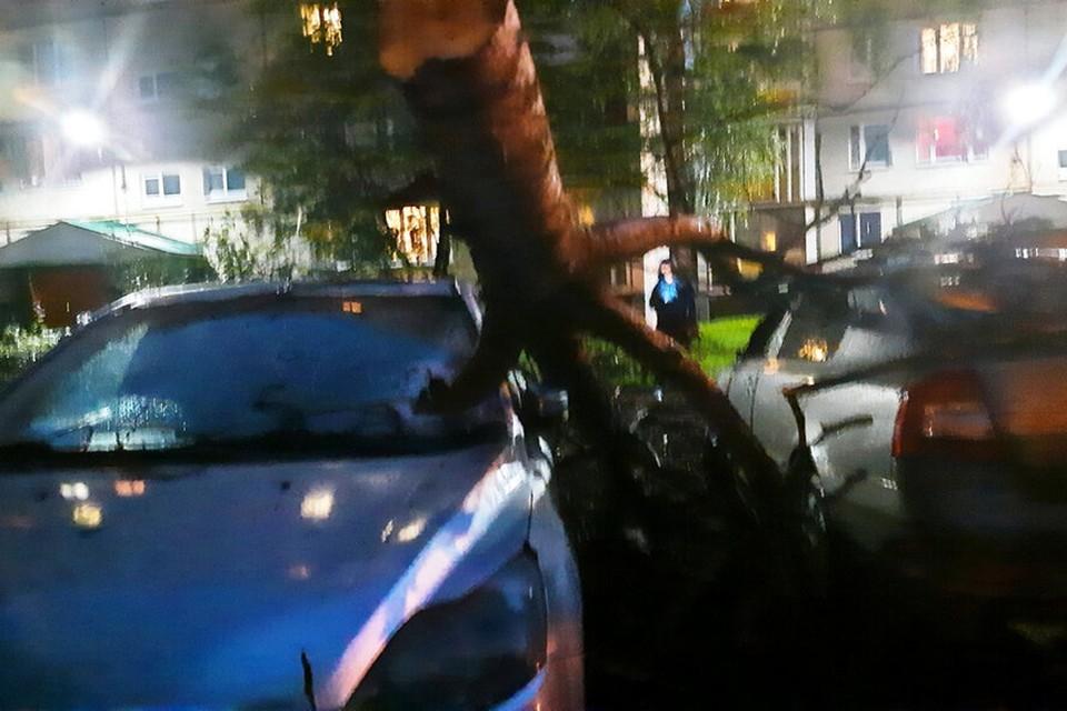"""Упавшее от сильного ветра дерево повредило машину в Конаково. Фото. VK/ """"Конаково - наш город»."""