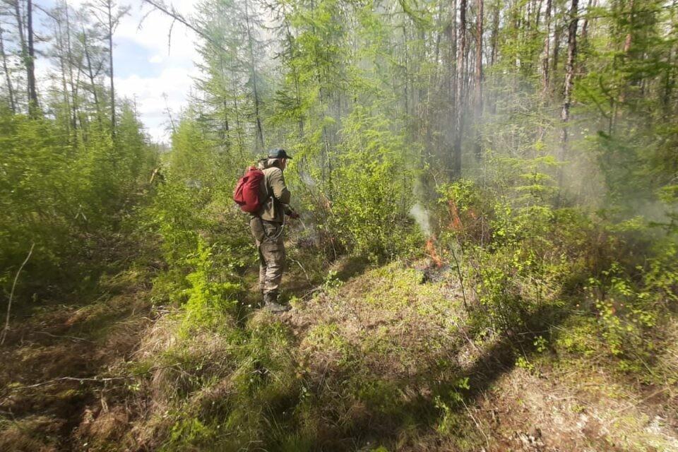 В Якутии ликвидировал лесной пожар на площади 113 гектаров ФОТО: правительство Республики Саха (Якутия)