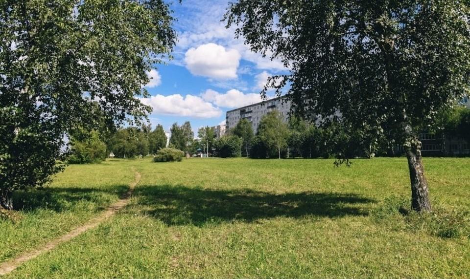 Зелёную зону на проспекте Строителей в Смоленске сделают рекреационной. Фото: пресс-служба администрации Смоленской области.