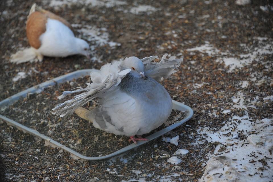 Животное спасла очевидица произошедшего. Пальцы животного набивались кровью. Фото: Архив «КП»