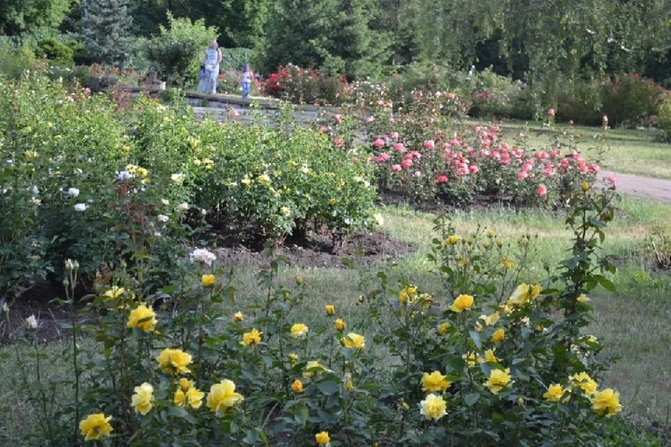 По большей части школьники благоустраивали территории, одним из самых популярных мест работы был Донецкий ботанический сад