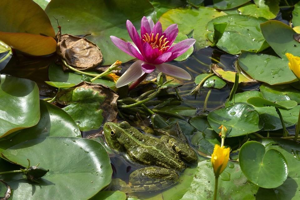 Фото: vk.com/chudstav