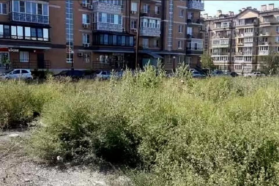 В этом году выкосили около 4 тысяч га сорняка. Фото: сайт правительства РО