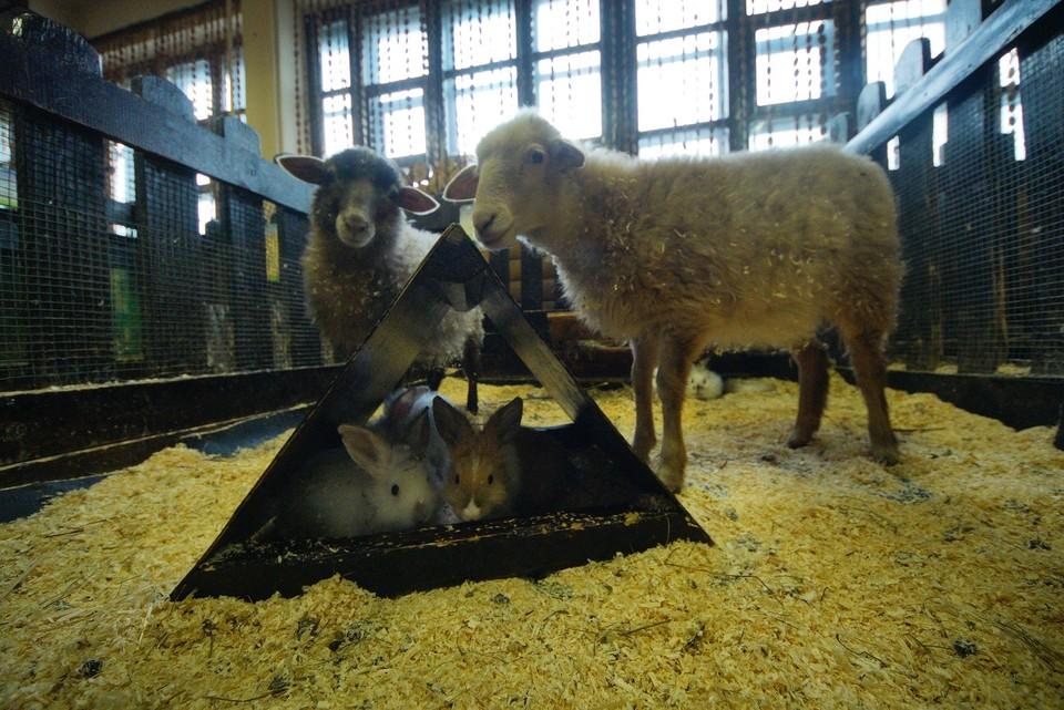 Россельхознадзор отказал контактному зоопарку в выдаче лицензии на деятельность