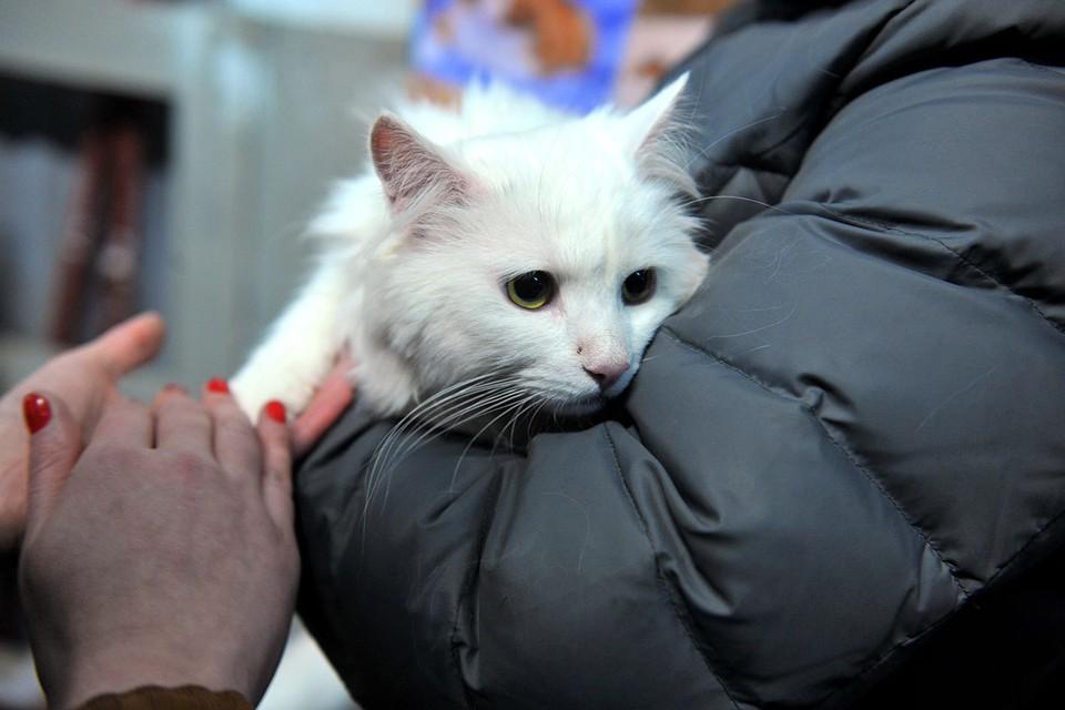 На Тверском бульваре москвичи смогут познакомиться с собаками и кошками, которые живут в приютах, но ищут любящих хозяев.