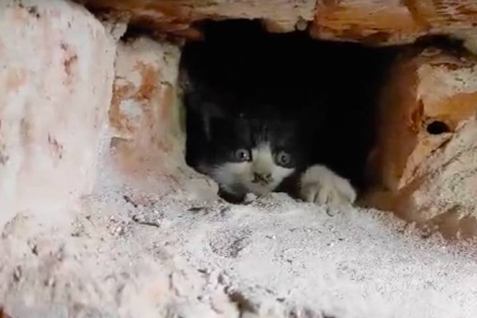 Котят спасли из дымохода в старом доме Петербурга