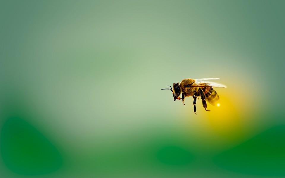 В деревне Котнырево массово погибли пчелы. Фото: pixabay.com