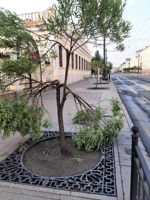Сибирячка поломала деревья после того, как сильно напилась.