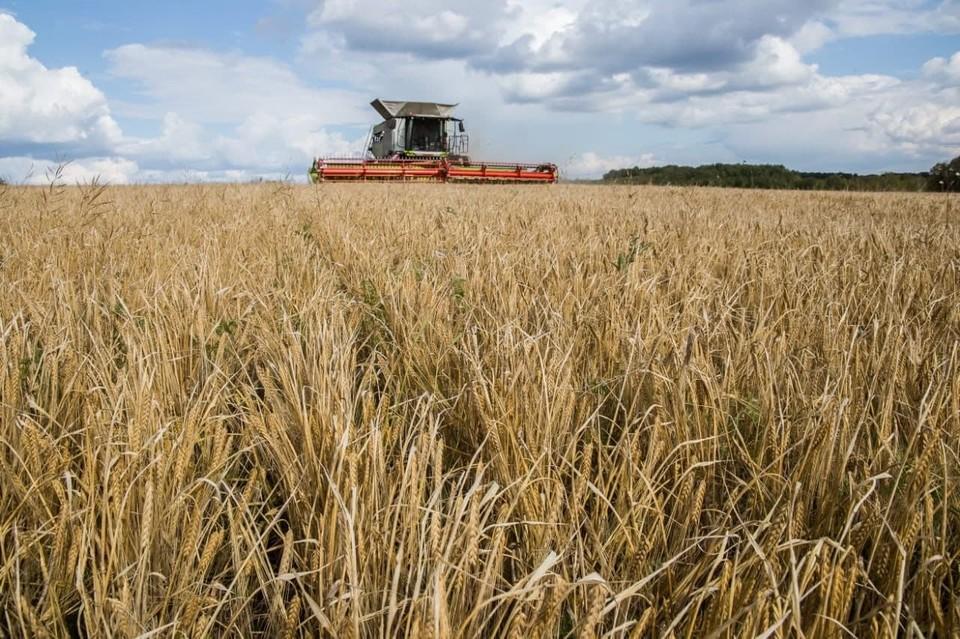 В Кузбассе собрали миллион тонн зерна. Фото: АПК.
