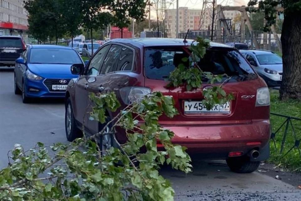 Мощные последствия урагана в Петербурге 14 сентября