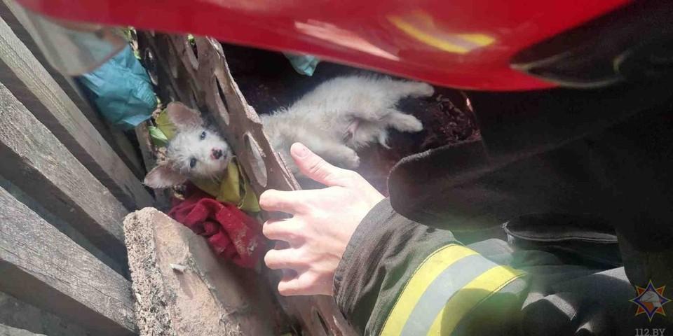В Щучине спасатели вытащили из-под завала застрявшего бездомного щенка. Фото: МЧС.