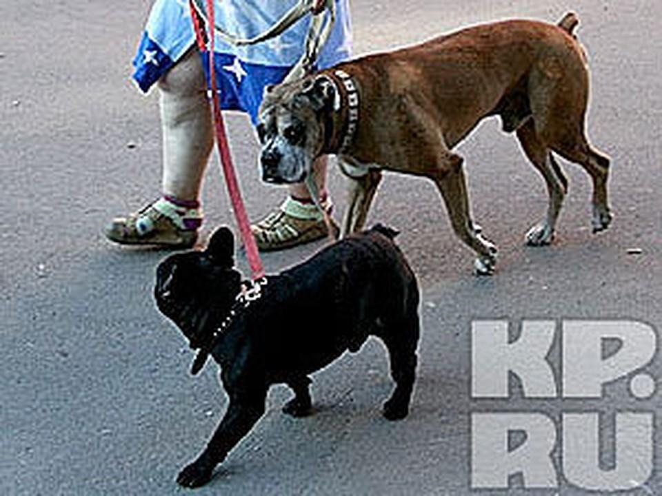 Любительница собак начала пальбу, защищая права своих животных