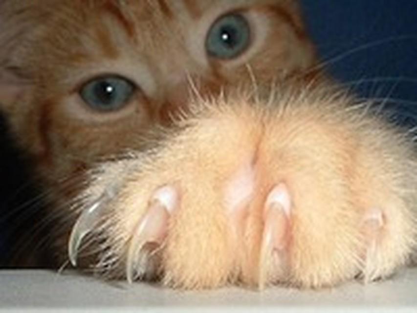 У котов есть правши