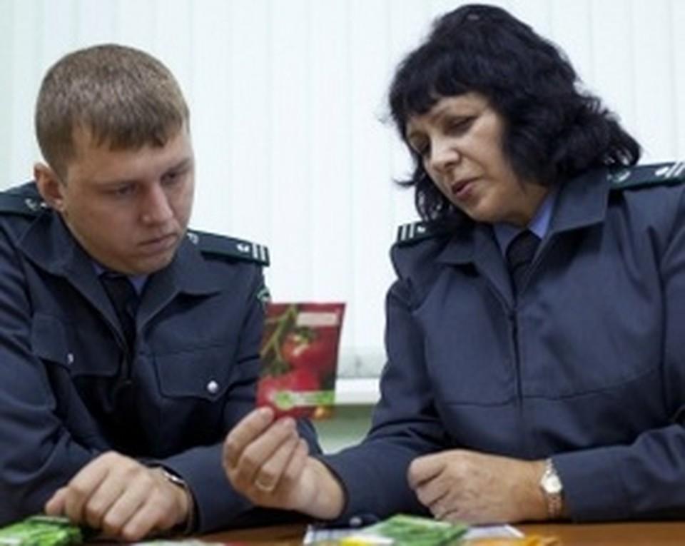 Надпись на пакетах гласила о том, что «Семена сертифицированы и допущены к реализации Россельхознадзором».
