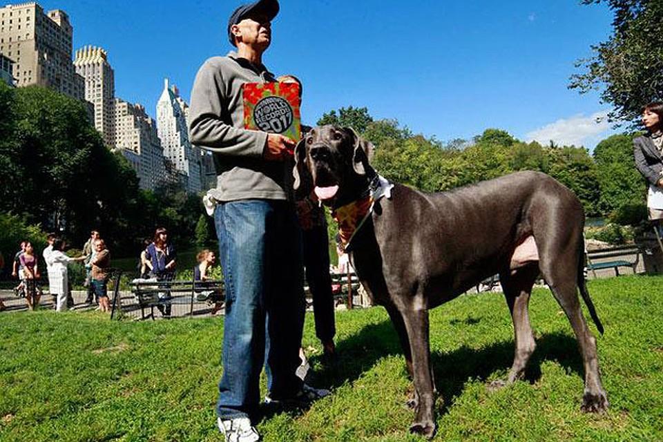 В США умерла собака-великан по кличке Гигантский Джордж | 640x960