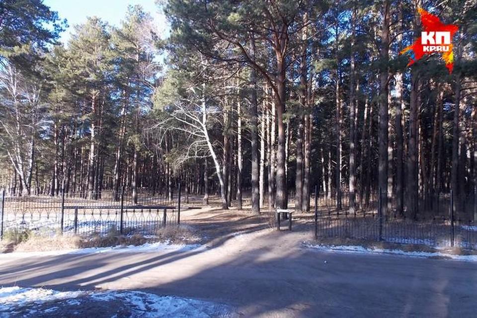 Гагаринский парк освободят от погибших деревьев