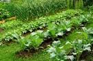 Закладываем грядку под скорый урожай