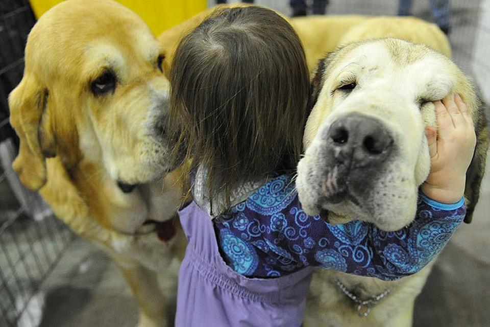 Кошки, собаки и даже ящерицы - это не только мимими, но и самая настоящая «Скорая помощь» для человека
