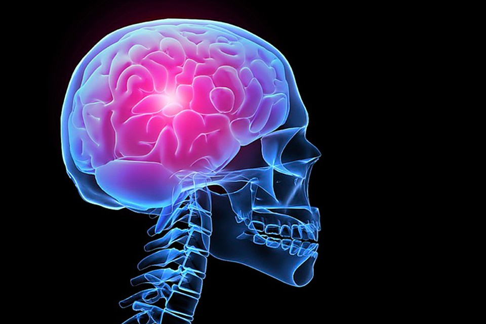 связи могут мозг и нос картинки убьют сеть